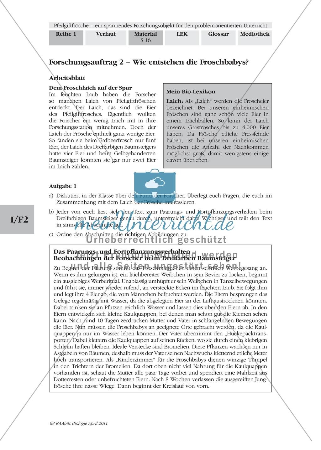 Fortpflanzung von Lurchen am Beispiel von Fröschen: Forschungsauftrag Preview 0