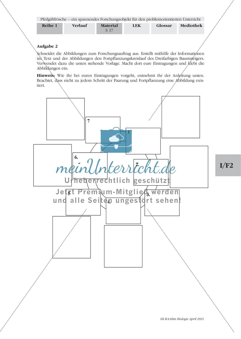 Fortpflanzung von Lurchen am Beispiel von Fröschen: Forschungsauftrag Preview 1