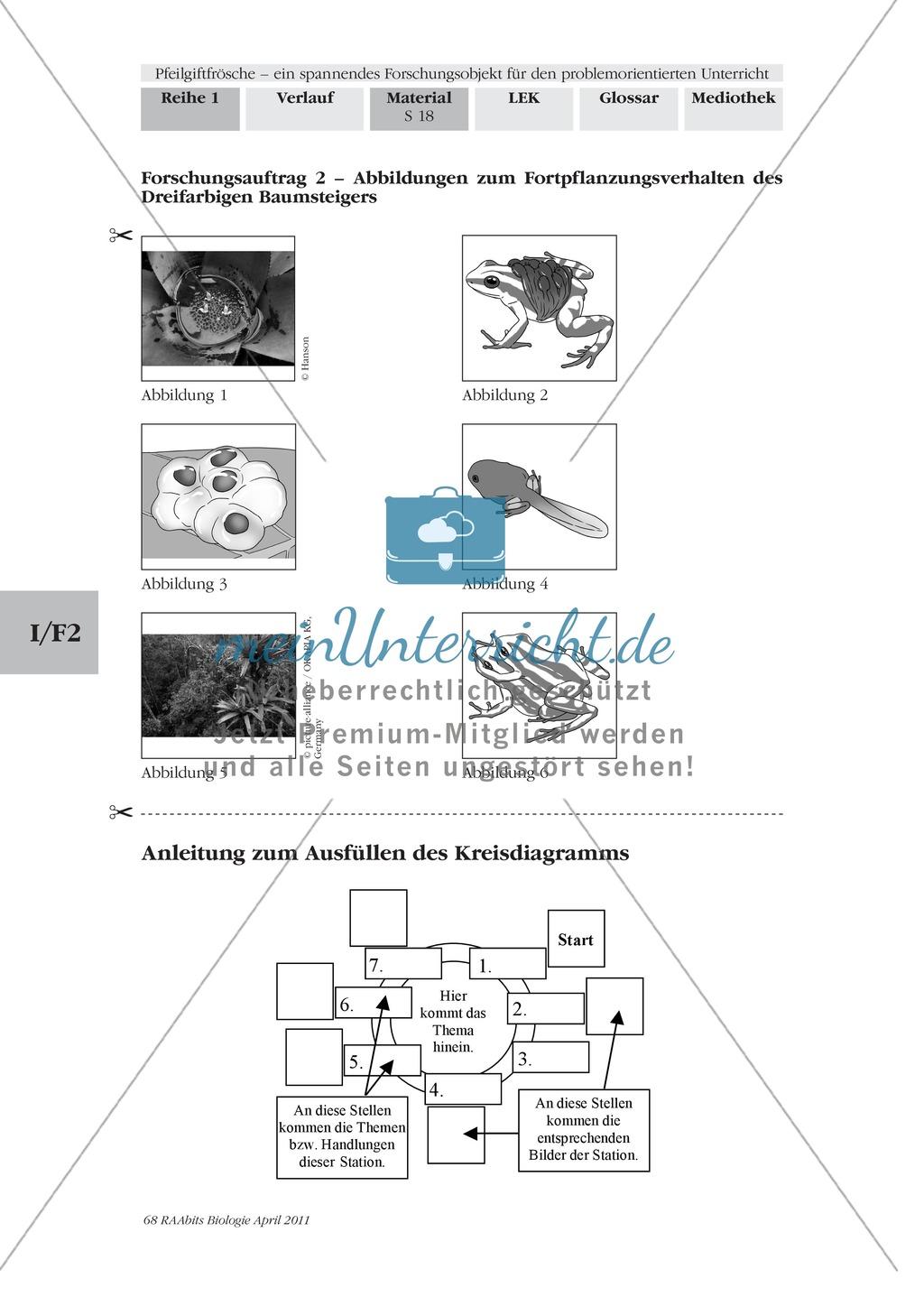 Fortpflanzung von Lurchen am Beispiel von Fröschen: Forschungsauftrag Preview 2