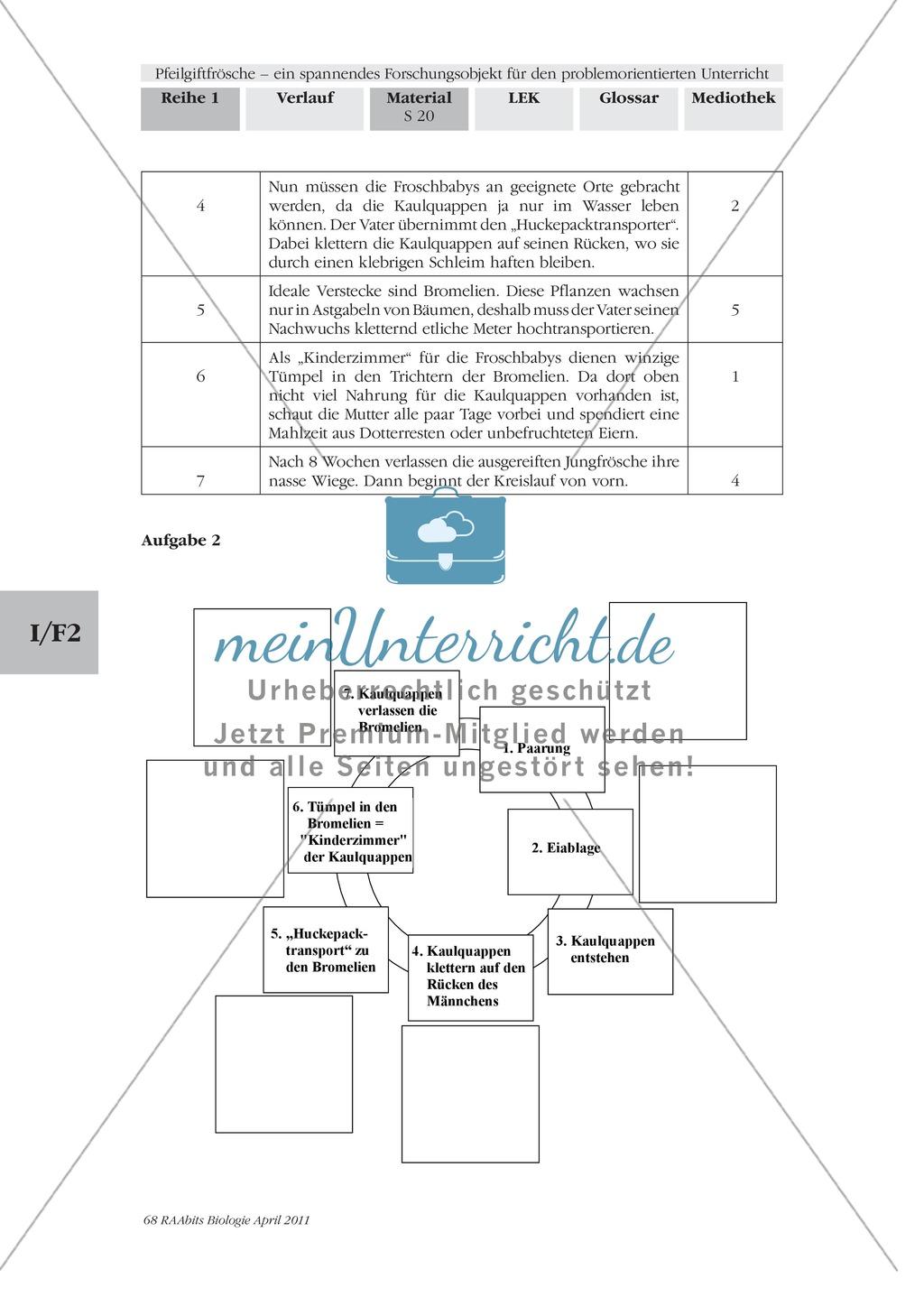 Fortpflanzung von Lurchen am Beispiel von Fröschen: Forschungsauftrag Preview 4