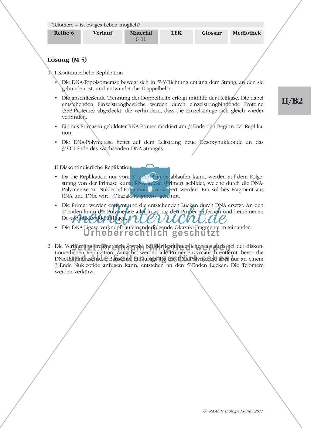 Verkürzung der Telomere: Text Preview 2