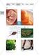 Problemorientierter Einstieg zum Thema Apoptose: Farbfolie Thumbnail 0