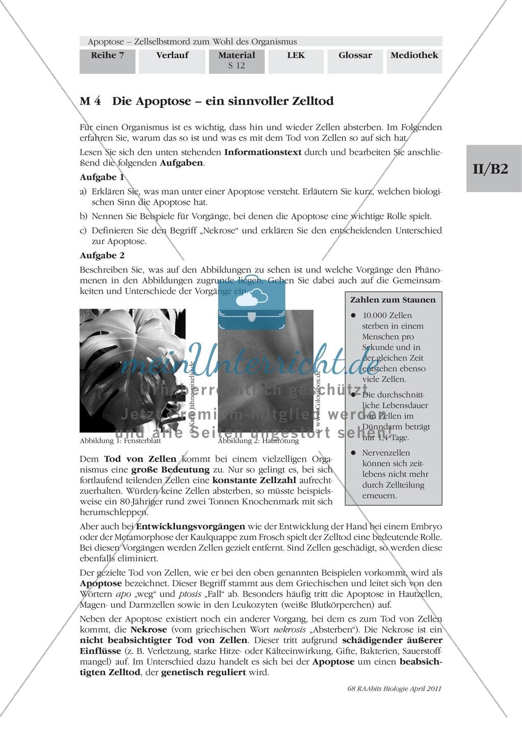 Definition, Wege und Auslöser der Apoptose: Texte, Abbildungen Preview 0