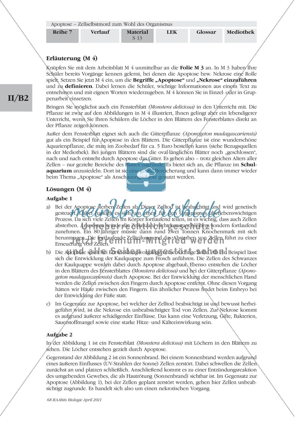 Definition, Wege und Auslöser der Apoptose: Texte, Abbildungen Preview 1