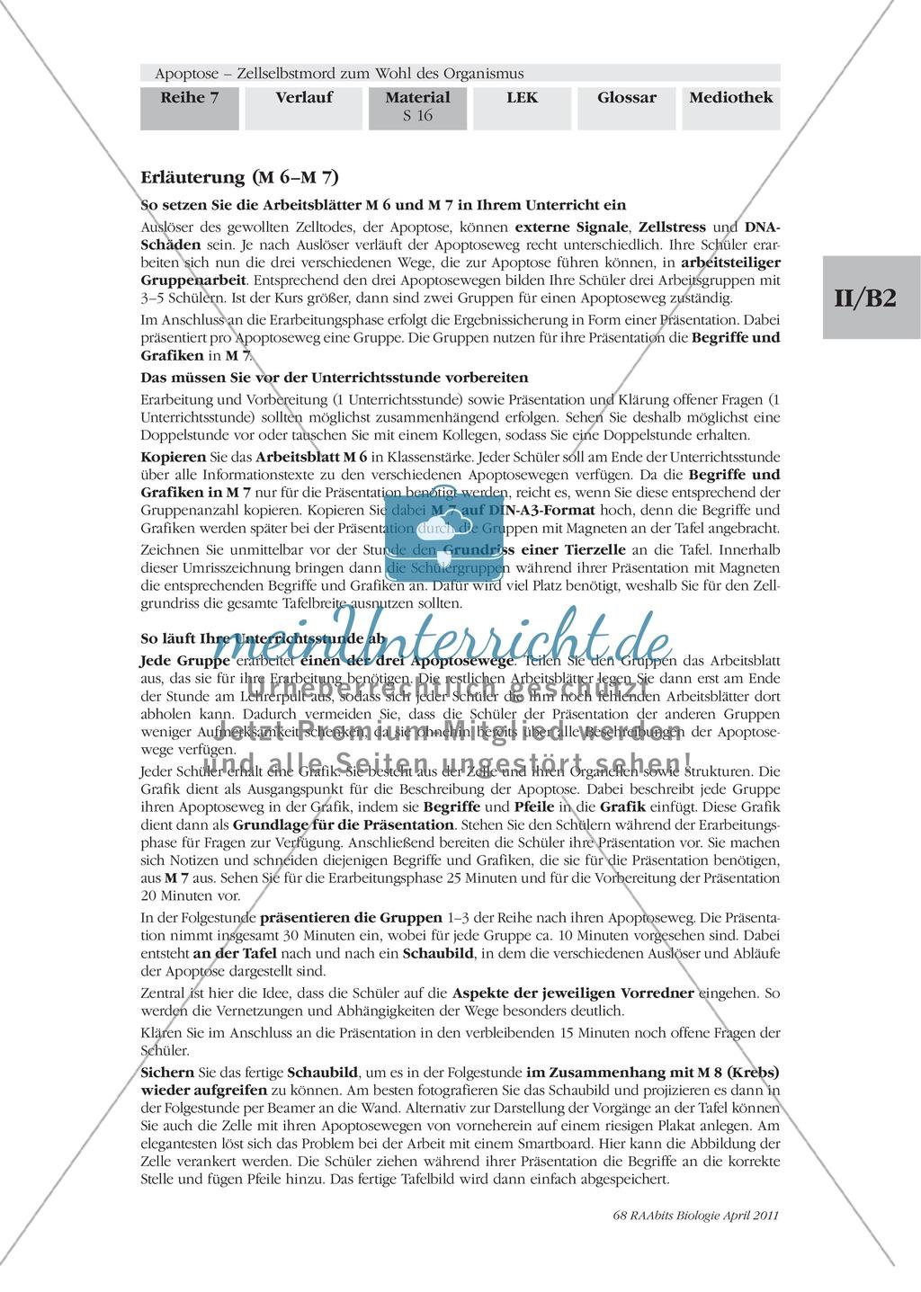 Definition, Wege und Auslöser der Apoptose: Texte, Abbildungen Preview 4