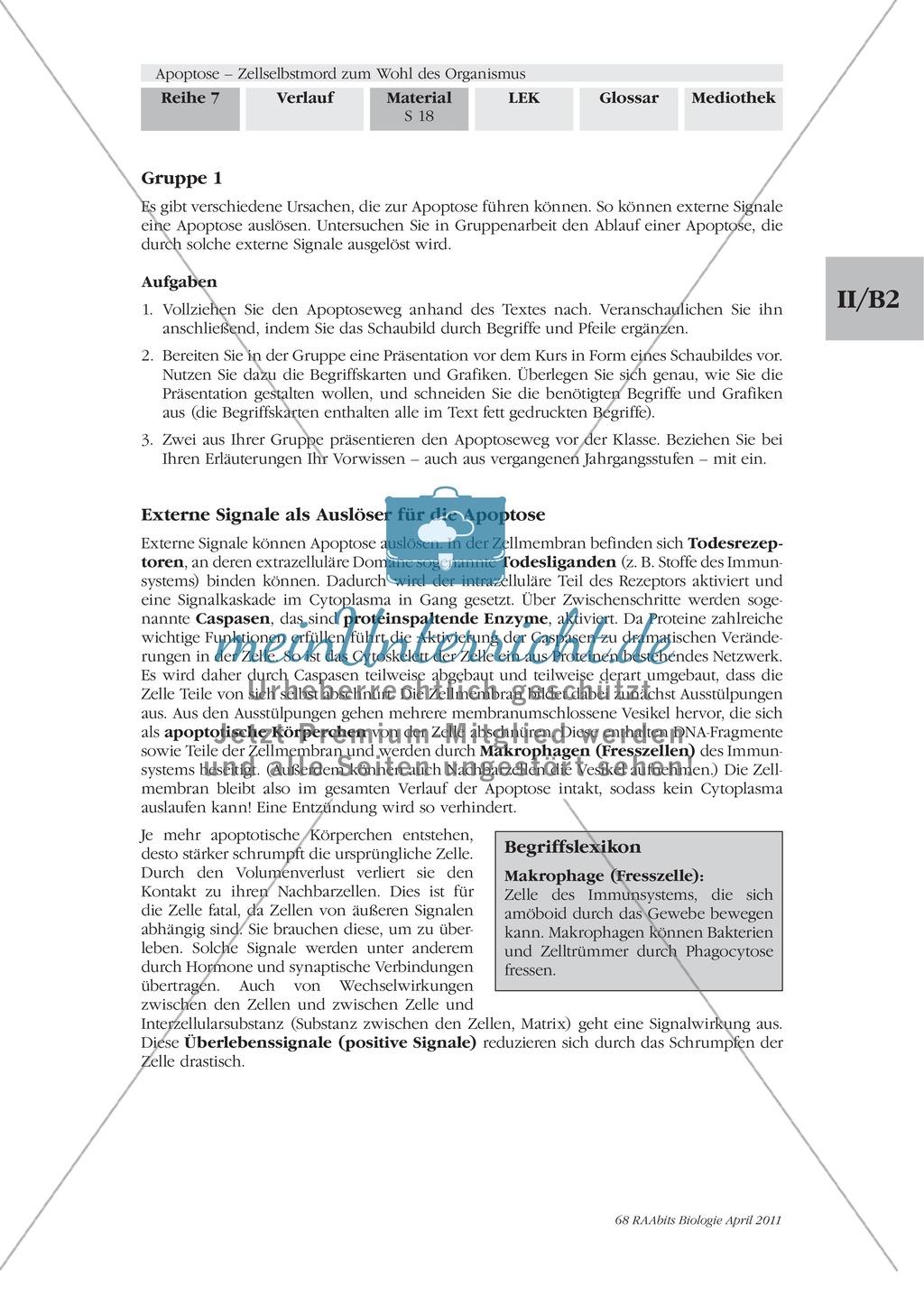 Definition, Wege und Auslöser der Apoptose: Texte, Abbildungen Preview 6
