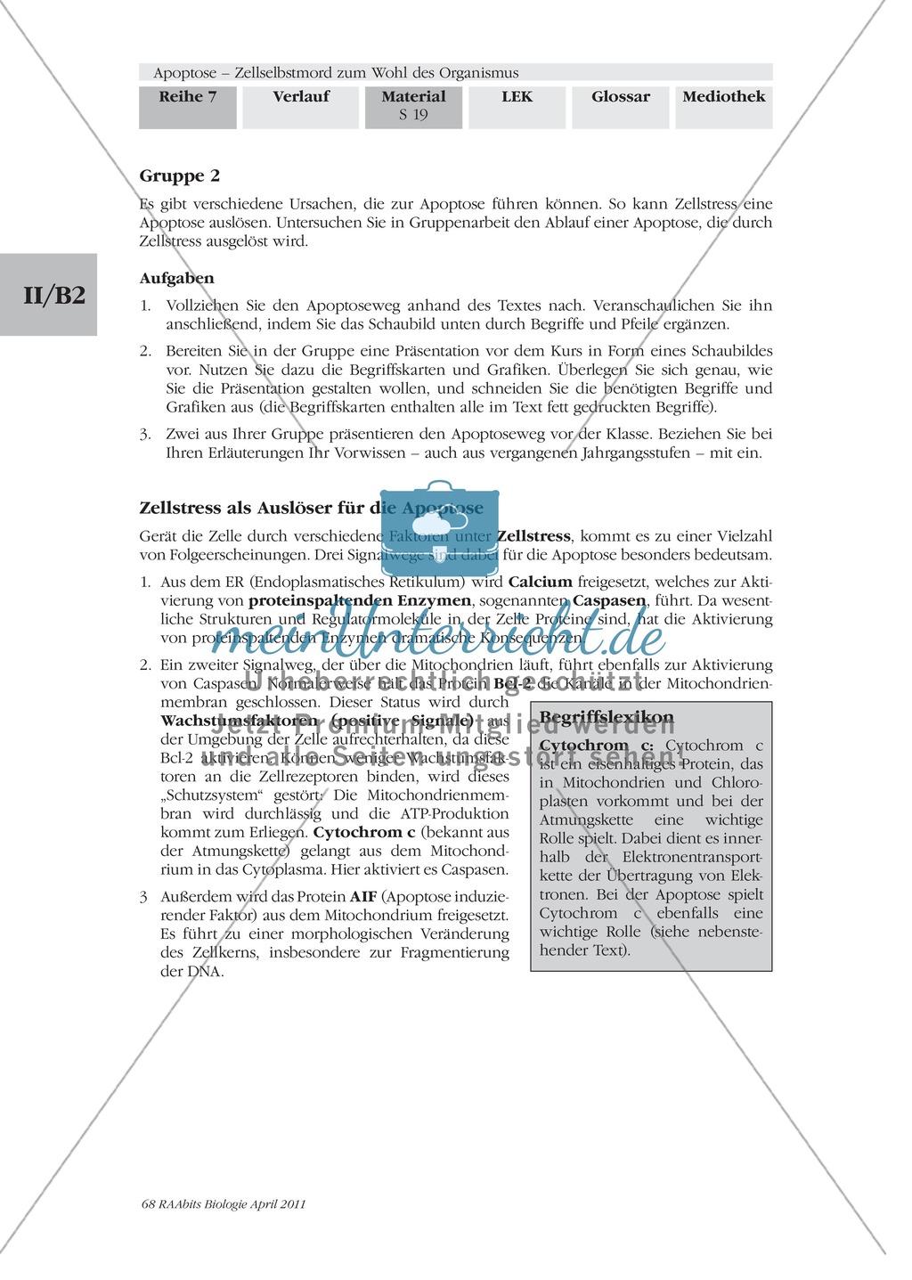 Definition, Wege und Auslöser der Apoptose: Texte, Abbildungen Preview 7