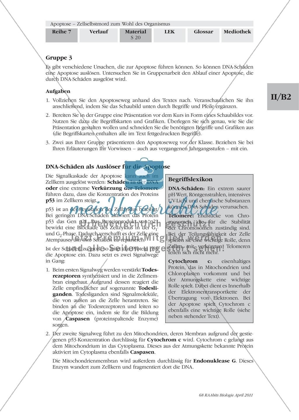 Definition, Wege und Auslöser der Apoptose: Texte, Abbildungen Preview 8