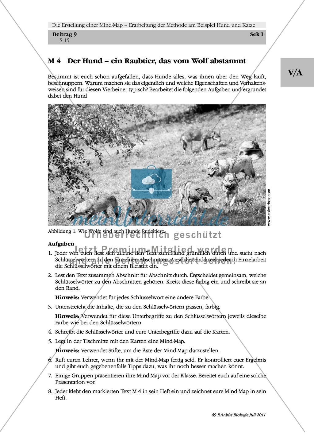 Methoden zu Erstellung einer Mind-Map: Informationstext zum Hund in Gruppenarbeit zu einer Mind-Map umstrukturieren und das Ergebnis präsentieren Preview 1