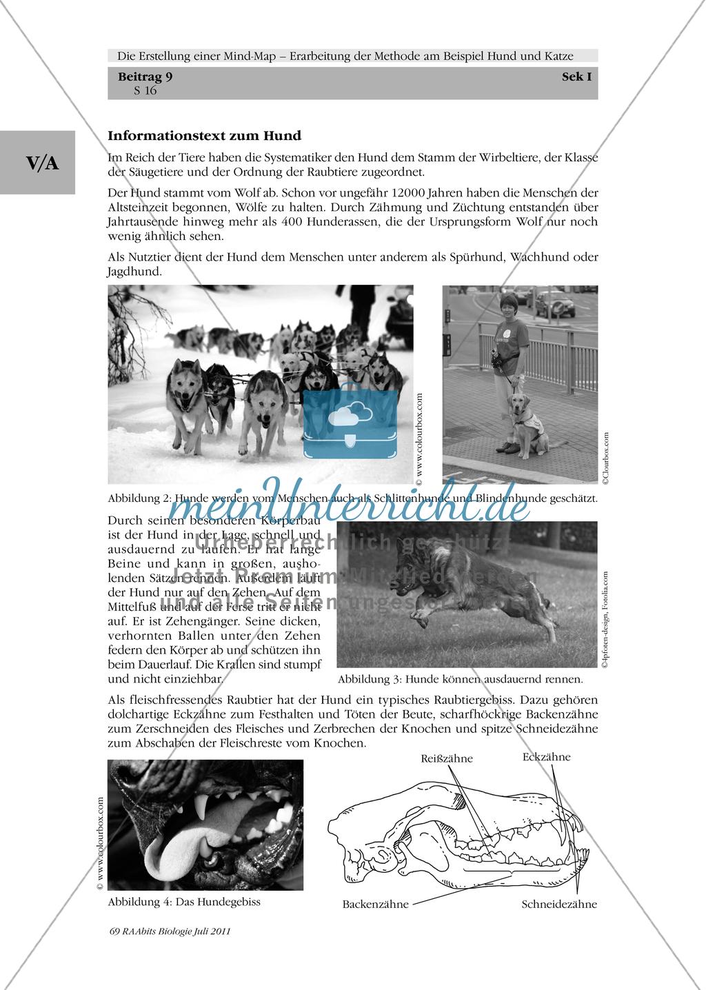 Methoden zu Erstellung einer Mind-Map: Informationstext zum Hund in Gruppenarbeit zu einer Mind-Map umstrukturieren und das Ergebnis präsentieren Preview 2
