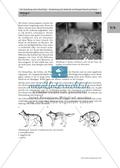 Methoden zu Erstellung einer Mind-Map: Informationstext zum Hund in Gruppenarbeit zu einer Mind-Map umstrukturieren und das Ergebnis präsentieren Preview 4