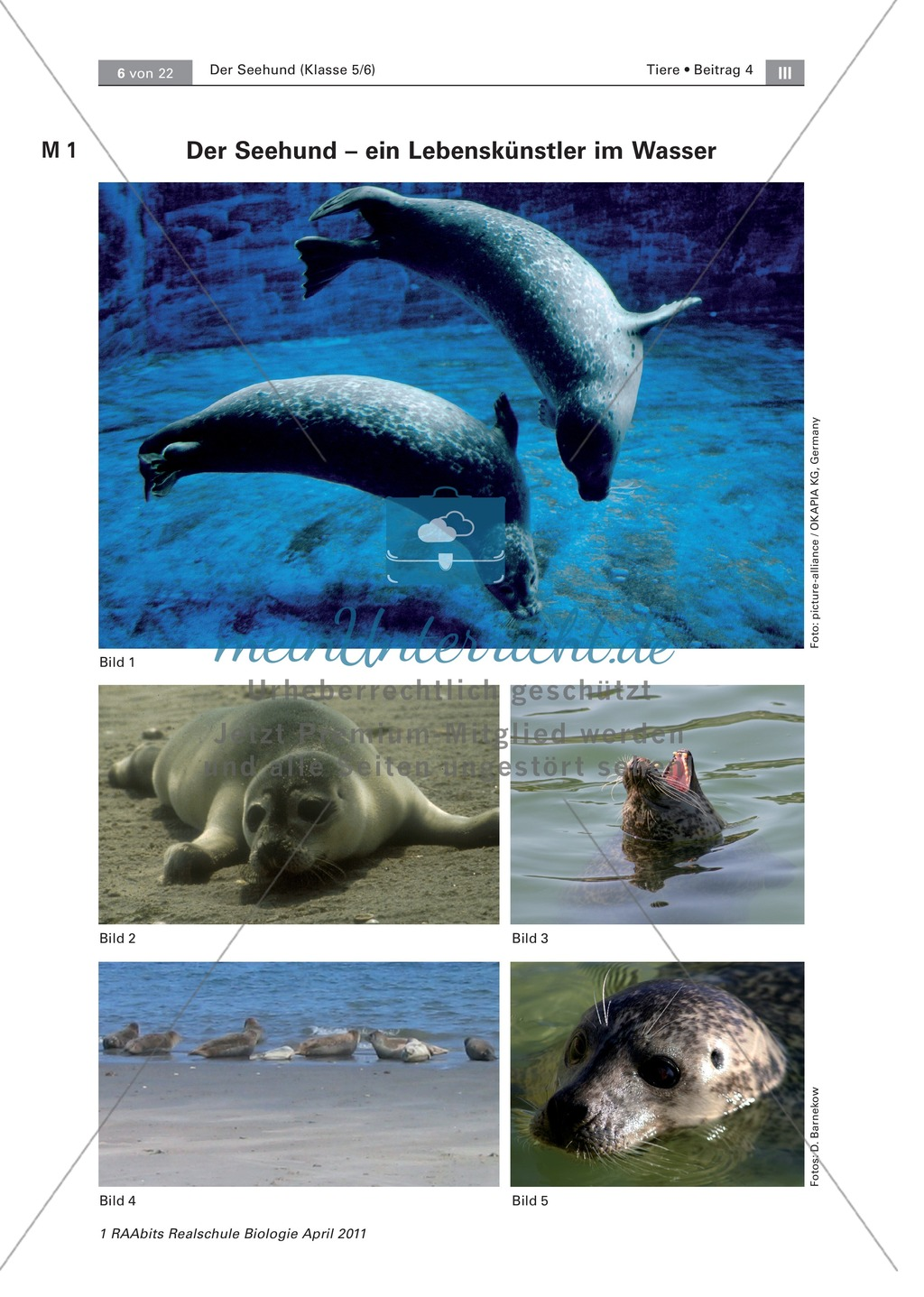 Überblick über die Sinne von Seehunden: Fotos + Puzzle +  Aussagen zuordnen Preview 0