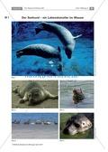 Biologie, Bau und Funktion von Biosystemen, Informationsverarbeitung in Lebewesen, Interaktion von Organismus und Umwelt, Tier, Sinnwahrnehmung, Lebensraum, Carnivoren, Anpassung, Seehund, Meeressäuger