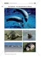 Überblick über die Sinne von Seehunden: Fotos + Puzzle +  Aussagen zuordnen Thumbnail 0