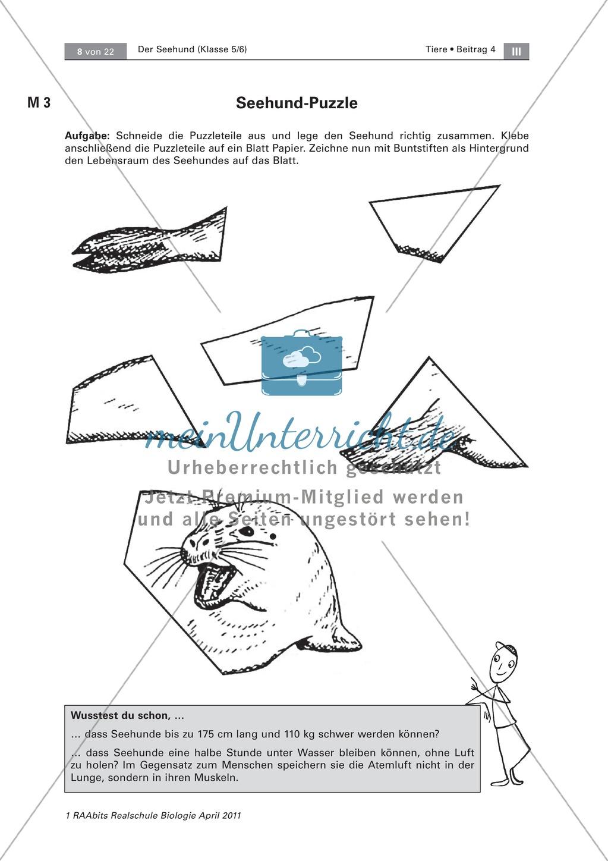 Überblick über die Sinne von Seehunden: Fotos + Puzzle +  Aussagen zuordnen Preview 2