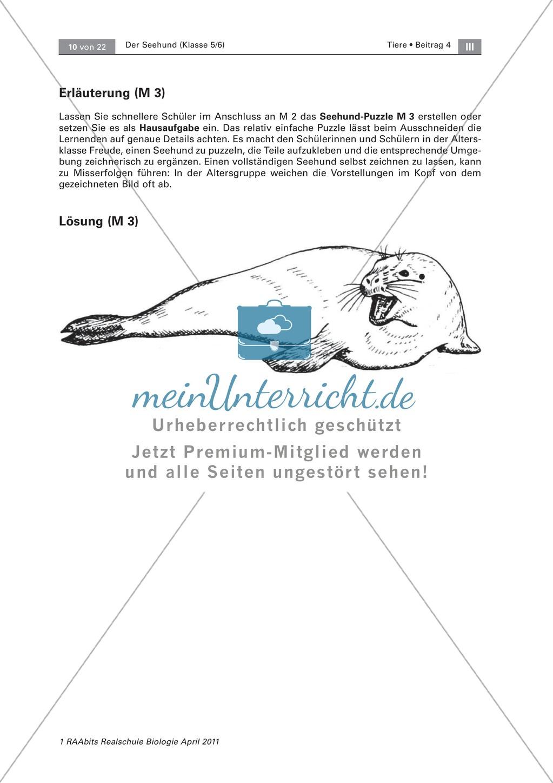 Überblick über die Sinne von Seehunden: Fotos + Puzzle +  Aussagen zuordnen Preview 4