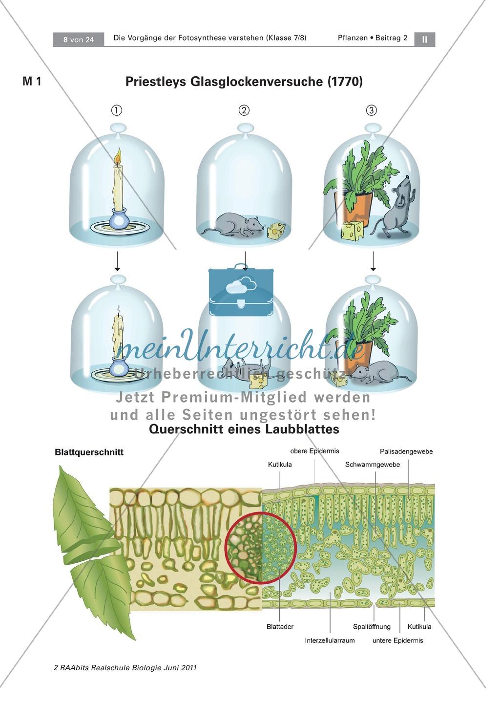 die vorg nge der fotosynthese querschnitt eines laubblattes versuche mit der wasserpest. Black Bedroom Furniture Sets. Home Design Ideas