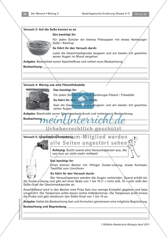 Beeinflussung der Ernährung durch den Geschmack: Geschmackstest Hamburger, Text Preview 3
