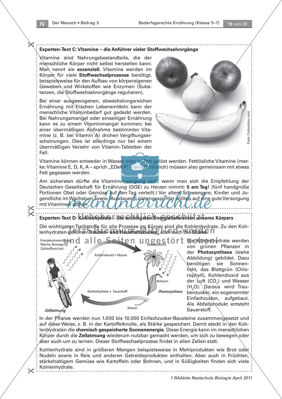 Gruppenpuzzle: Wofür braucht der Körper Nährstoffe. Sportlerernährung. Texte Preview 5