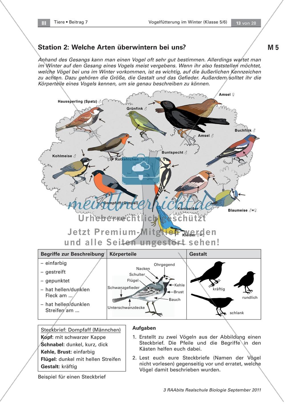 Überwinterung und Fütterung von Vögeln: Stationsarbeit, Herstellung einer Broschüre Preview 3