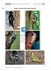 Spechte und ihre ökologische Nischen im Wald: Modelle, Beschriftung Thumbnail 0
