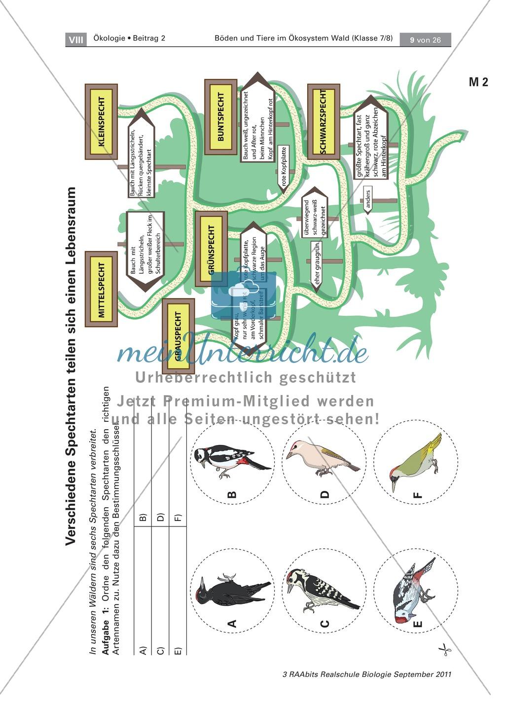 Spechte und ihre ökologische Nischen im Wald: Modelle, Beschriftung Preview 1