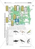 Spechte und ihre ökologische Nischen im Wald: Modelle, Beschriftung Preview 2
