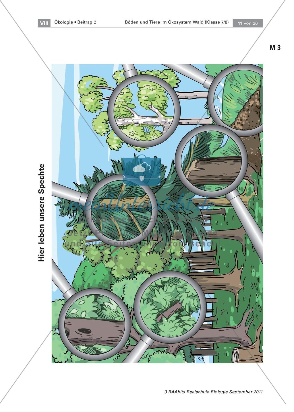 Spechte und ihre ökologische Nischen im Wald: Modelle, Beschriftung Preview 3