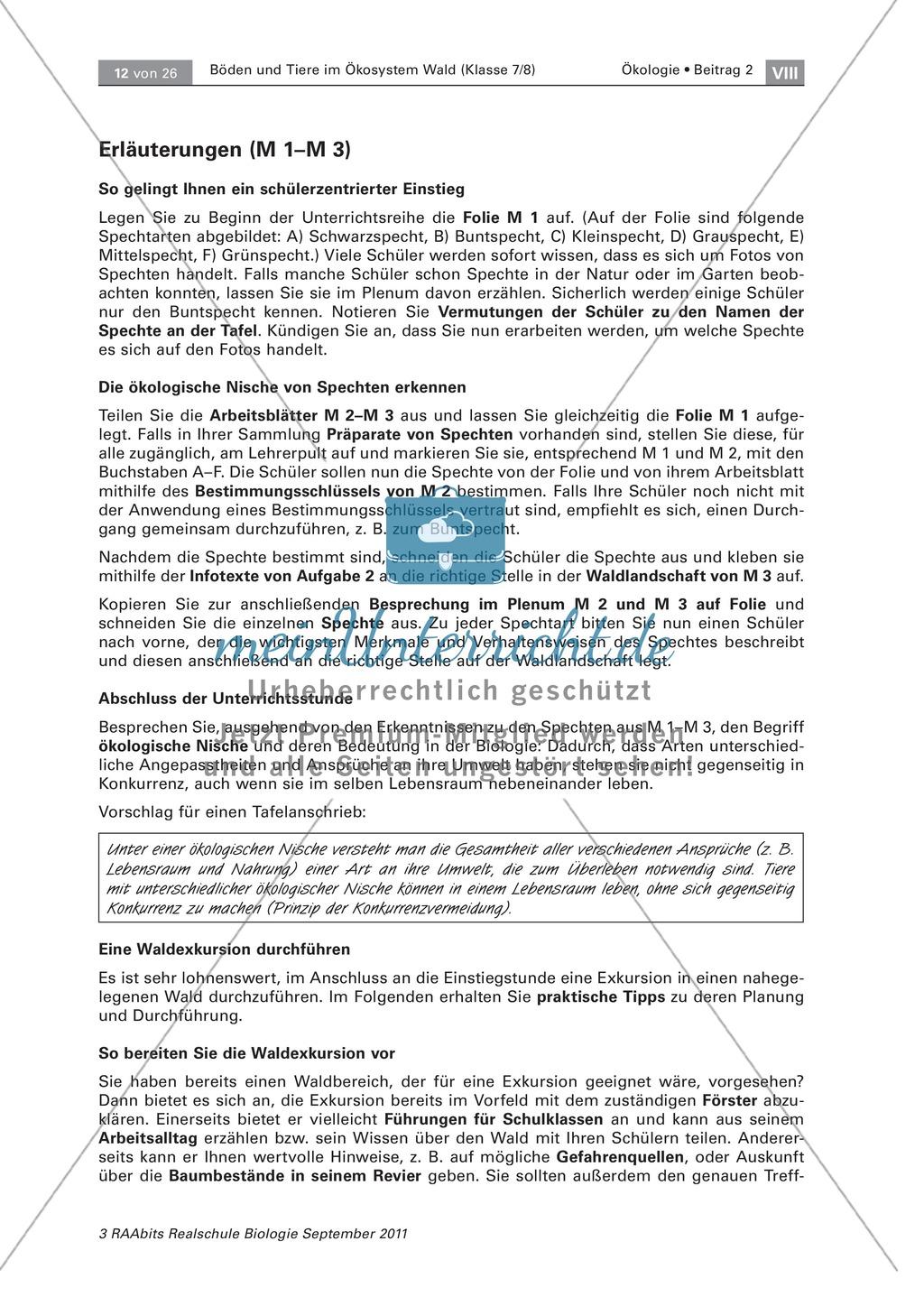 Spechte und ihre ökologische Nischen im Wald: Modelle, Beschriftung Preview 4
