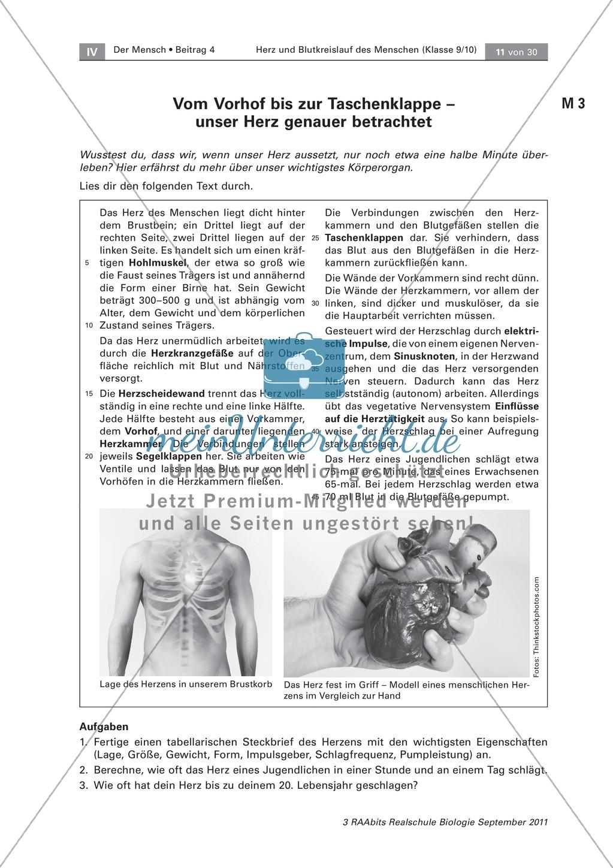 Arbeitsschritte des menschlichen Herzens: Steckbrief, Beschriften ...