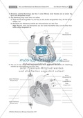 Arbeitsschritte des menschlichen Herzens: Steckbrief, Beschriften, Beschreiben Thumbnail 1