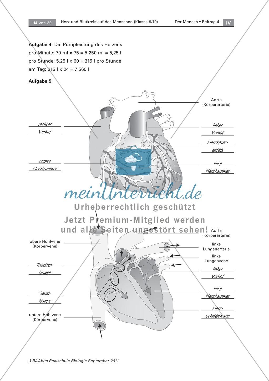 Arbeitsschritte des menschlichen Herzens: Steckbrief, Beschriften, Beschreiben Preview 3