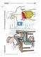 Verdauungsschritte: Zeichnen, Beschreiben Thumbnail 0