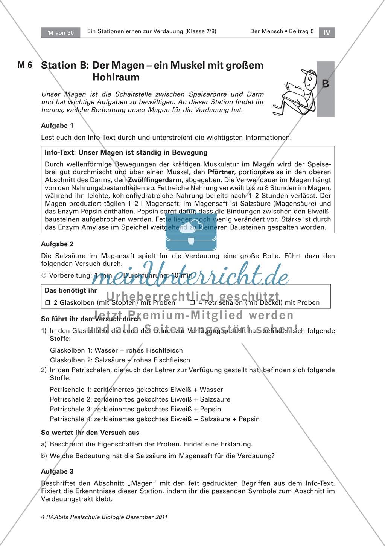 Magen: Text, Versuch - meinUnterricht