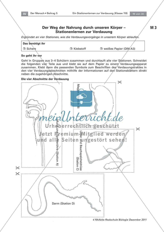 Leber und Bauchspeicheldrüse: Text, Versuch Preview 0