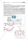 Leber und Bauchspeicheldrüse: Text, Versuch Preview 6