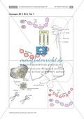 Leber und Bauchspeicheldrüse: Text, Versuch Preview 7