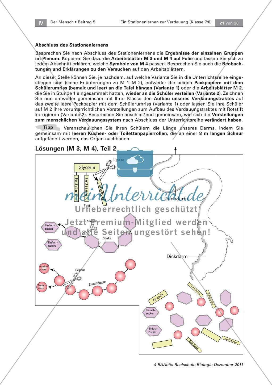 Dünndarm und Dickdarm: Text, Versuch Preview 5