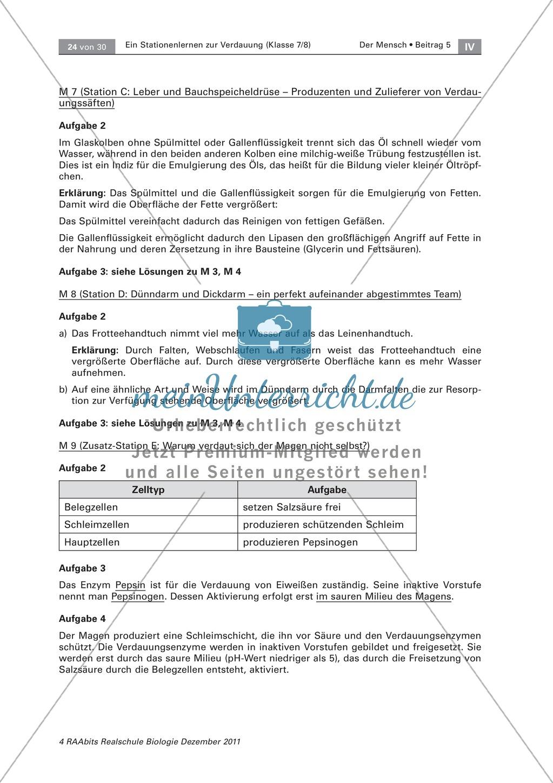 Dünndarm und Dickdarm: Text, Versuch - meinUnterricht