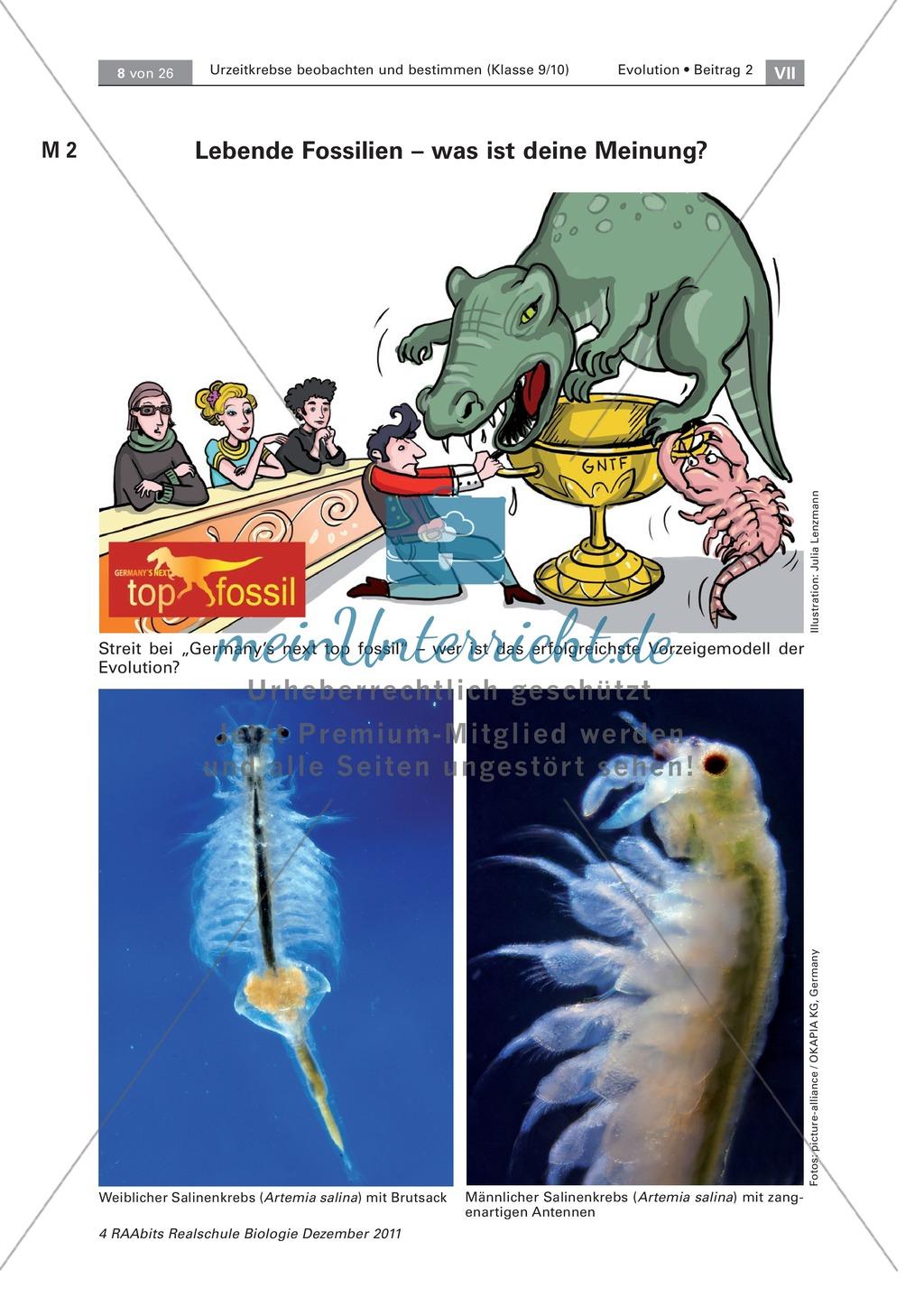 Fein Wie Fossilien Sind Aus Arbeitsblatt Galerie - Super Lehrer ...