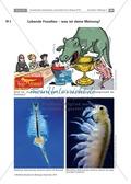 Evoultion  -  lebende Fossilien: Uhrzeitkrebse Thumbnail 1