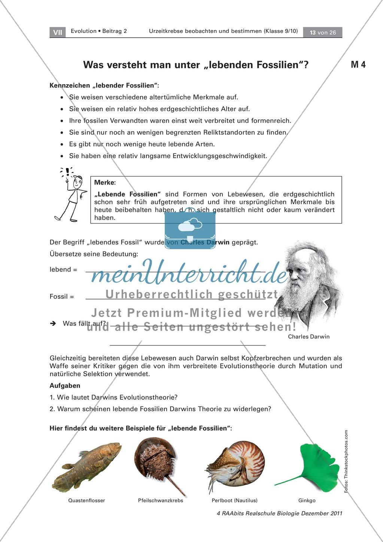 Evoultion - Fossilien: Die Placemat-Methode - Lebende Fossilien ...