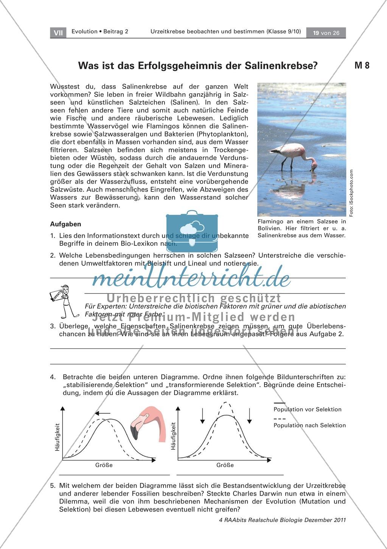 Evoultion  -  lebende Fossilien: Uhrzeitkrebse -  Anpassung der Salinenkrebse Preview 1