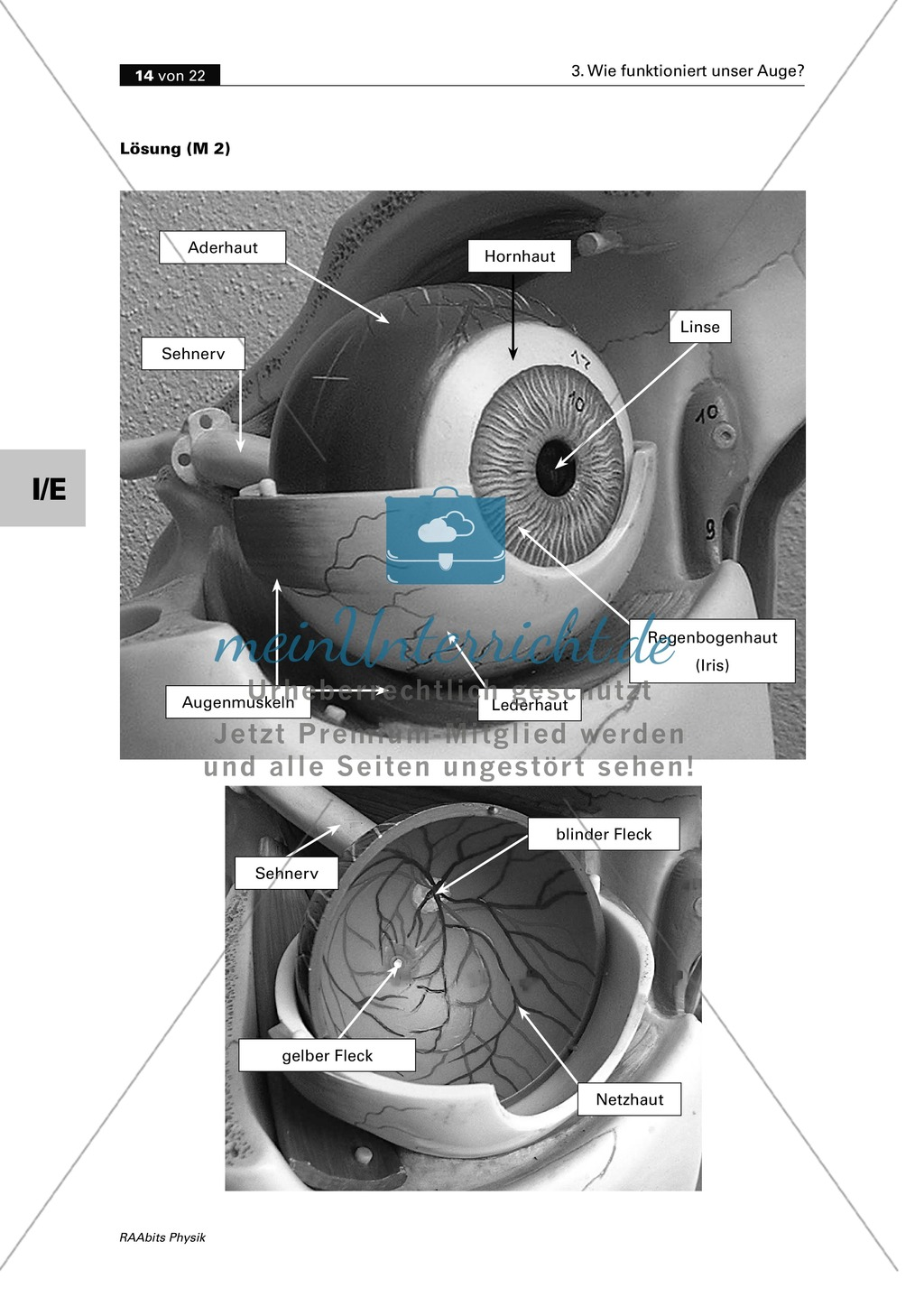 Optik: Wie das menschliche Auge funktioniert. Mit Aufgaben und Lösungen. Preview 5