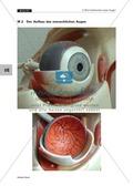 Optik: Wie das menschliche Auge funktioniert. Mit Aufgaben und Lösungen. Preview 9