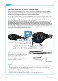 Extreme Lebensräume: Das Leben in der Tiefsee. Mit didaktischen Erläuterungen. Preview 8