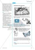 Die Ameise als Wirt am Beispiel der Bläulinge. Mit didaktischen Erläuterungen. Preview 3