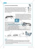 Die Ameise als Wirt am Beispiel der Bläulinge. Mit didaktischen Erläuterungen. Preview 4