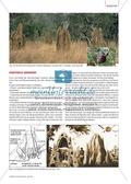Die Lebensräume von Termiten und ihr Hauptnahrungsmittel Holz. Mit didaktischen Erläuterungen. Preview 5