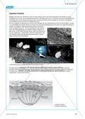 Die Symbiose zwischen Blattschneiderameise und Pilz. Mit didaktischen Erläuterungen. Preview 4